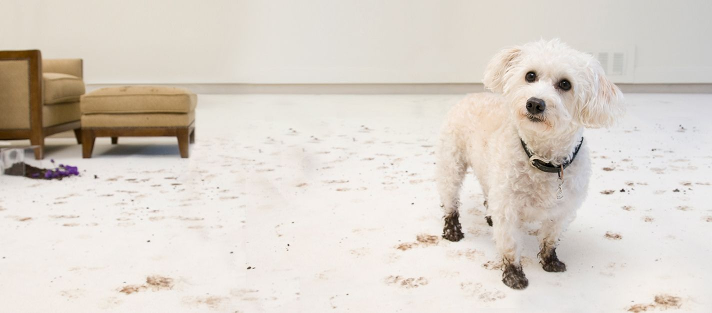 Pet Odour And Stain Removal Wimbledon
